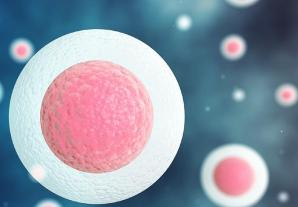 stem cells from poweredtemplates